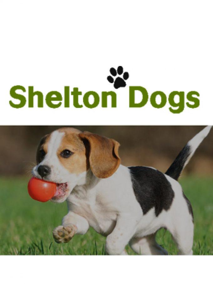 Shelton Dogs