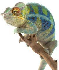 Media Chameleon – Super Links Package
