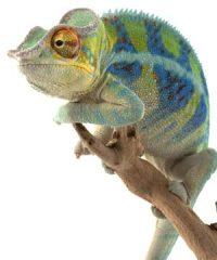 Media Chameleon – Diamond Package