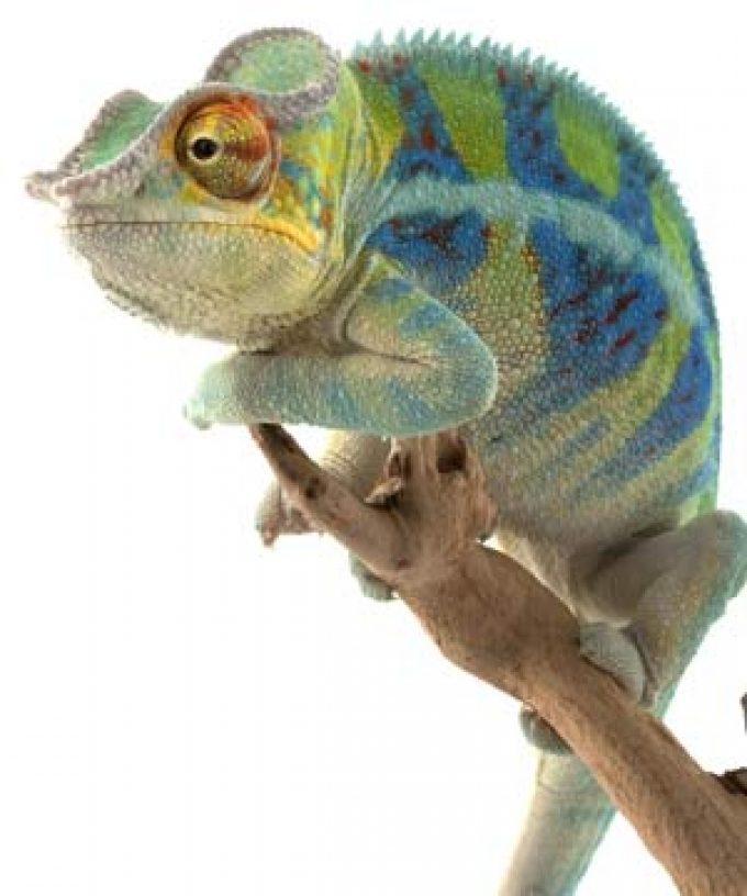 Media Chameleon – Super Links Package & Image Gallery