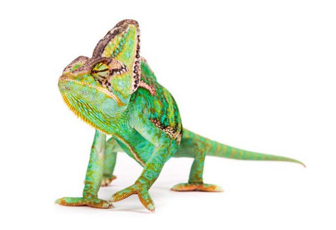 Media Chameleon